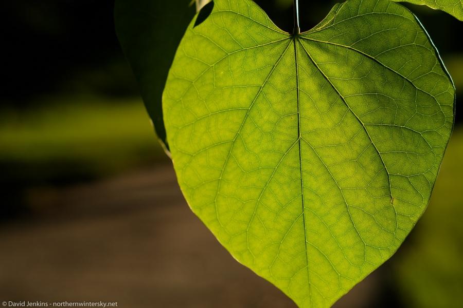 leaf_f4-1